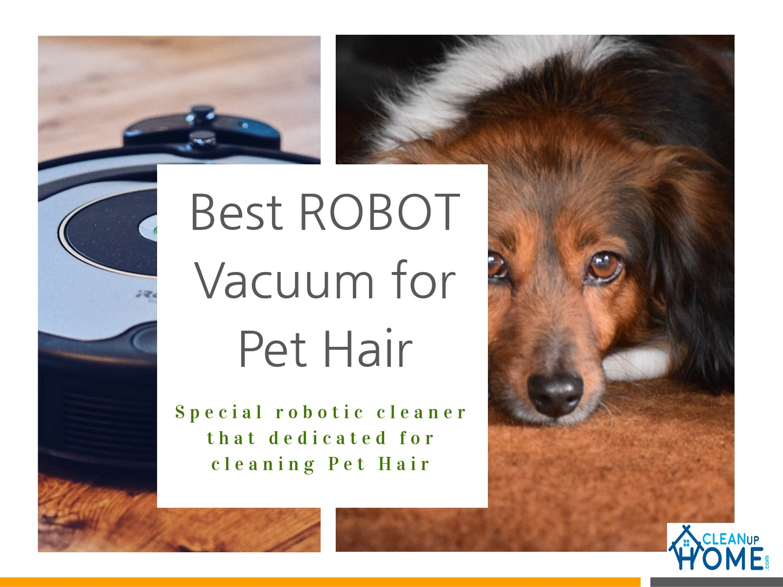 Communication on this topic: How to Maintain a Pets Hair, how-to-maintain-a-pets-hair/