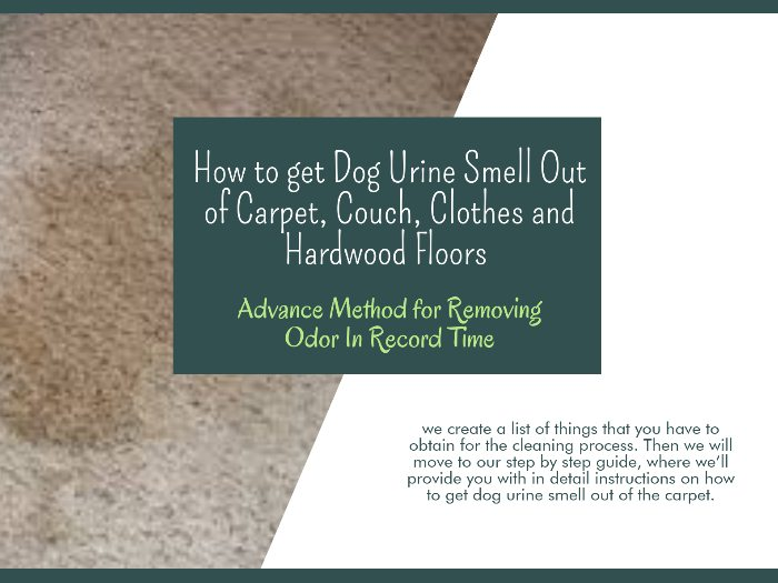 How to get Dog Urine Smell Out of Carpet, Couch, Clothes and Hardwood Floors