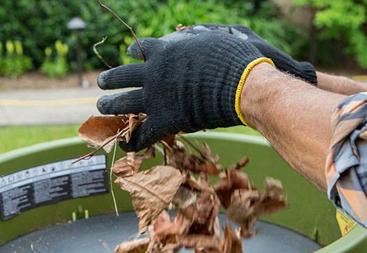 Gather the Leaves in Your Backyard