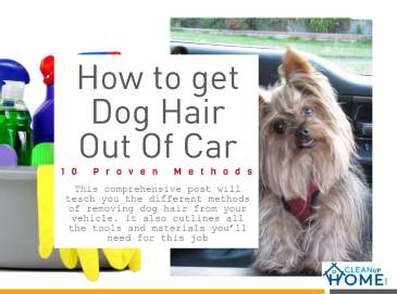 How to get Dog Hair Out of_Car